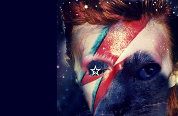heroes_cat_bowie
