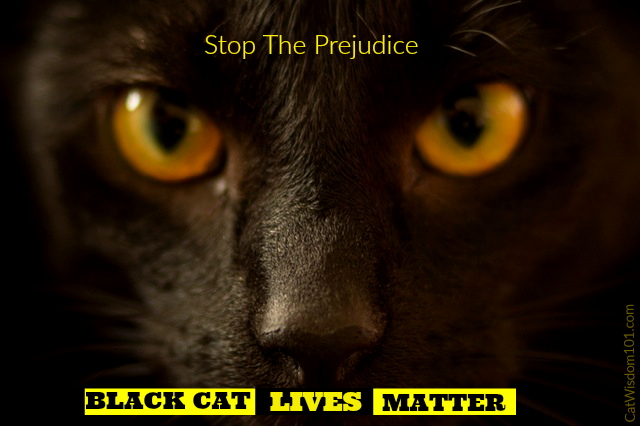 Black Cat Lives Matter