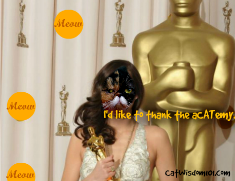 2016 Cat Oscars:  Meow Mix Announces the Year's Best Internet Cat Moments