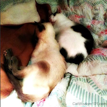 Merlin_Odin_cats