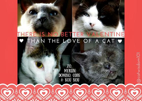 Valentine_catscat wisdom 101