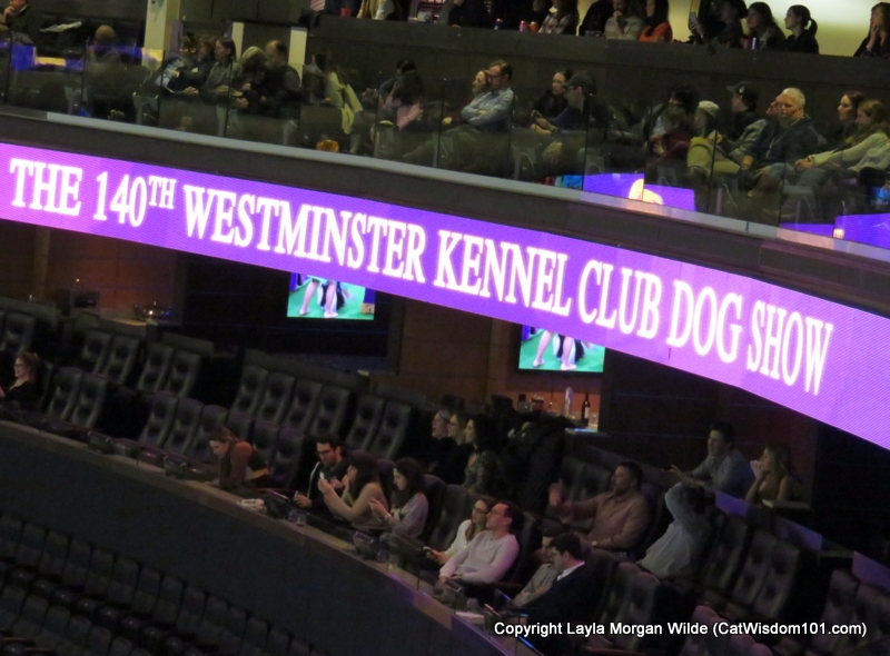 Westminster_Dog_Show_sky box