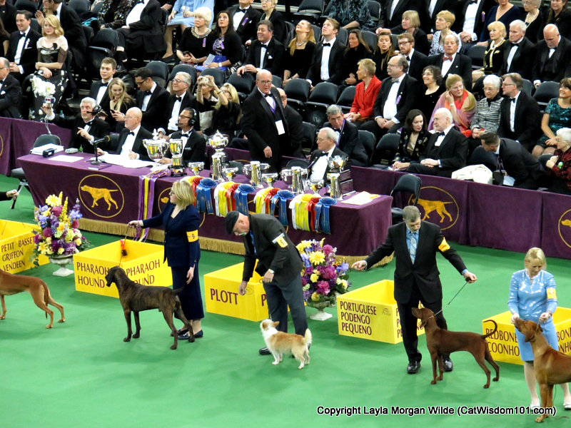 Westminster_Dog_Show_2016