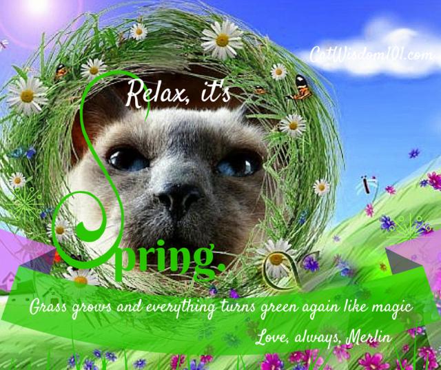 Cat_wisdom_spring_quote