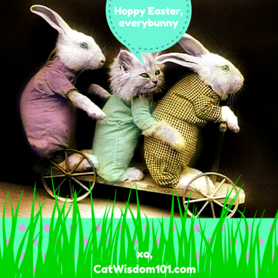Hip Hoppy Happy Easter Cats and Bunnies