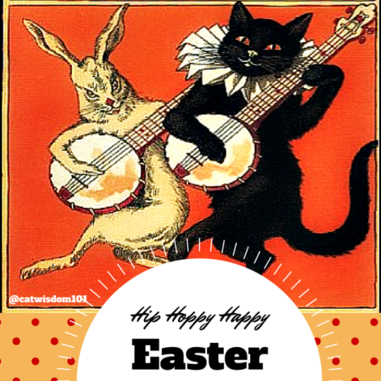 Hip hoppy_easter_cat