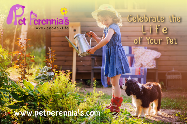 Pet_perennials