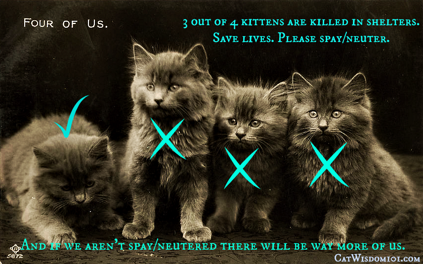 Vintage_kittens_spayneuter