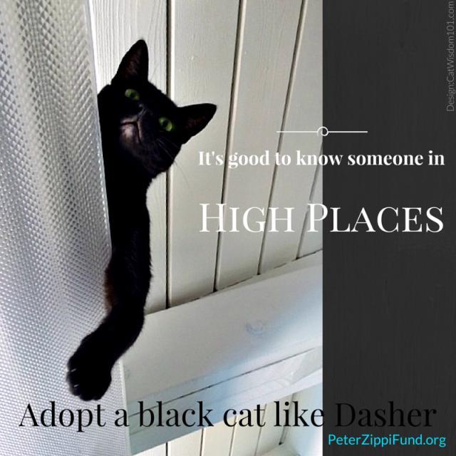 adopt_a_black_cat