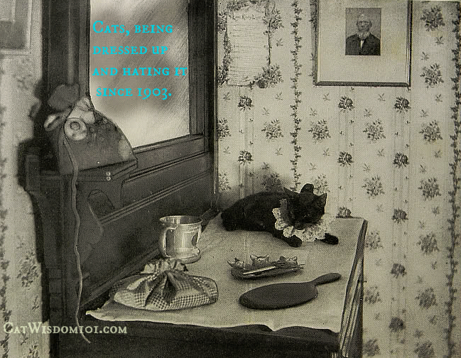 antique_black_cat_quote