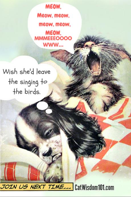 cat caption cartoon