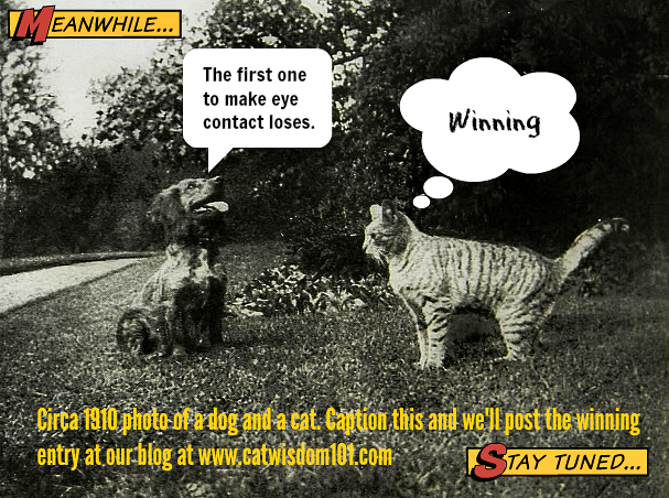 Funny Vintage Cat Caption Contest Winner