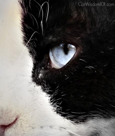 snowshow_cat_selfie