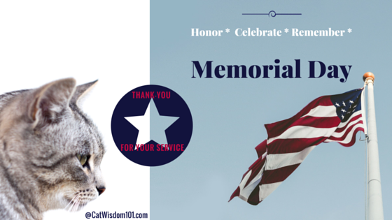 Memorial _day_meows