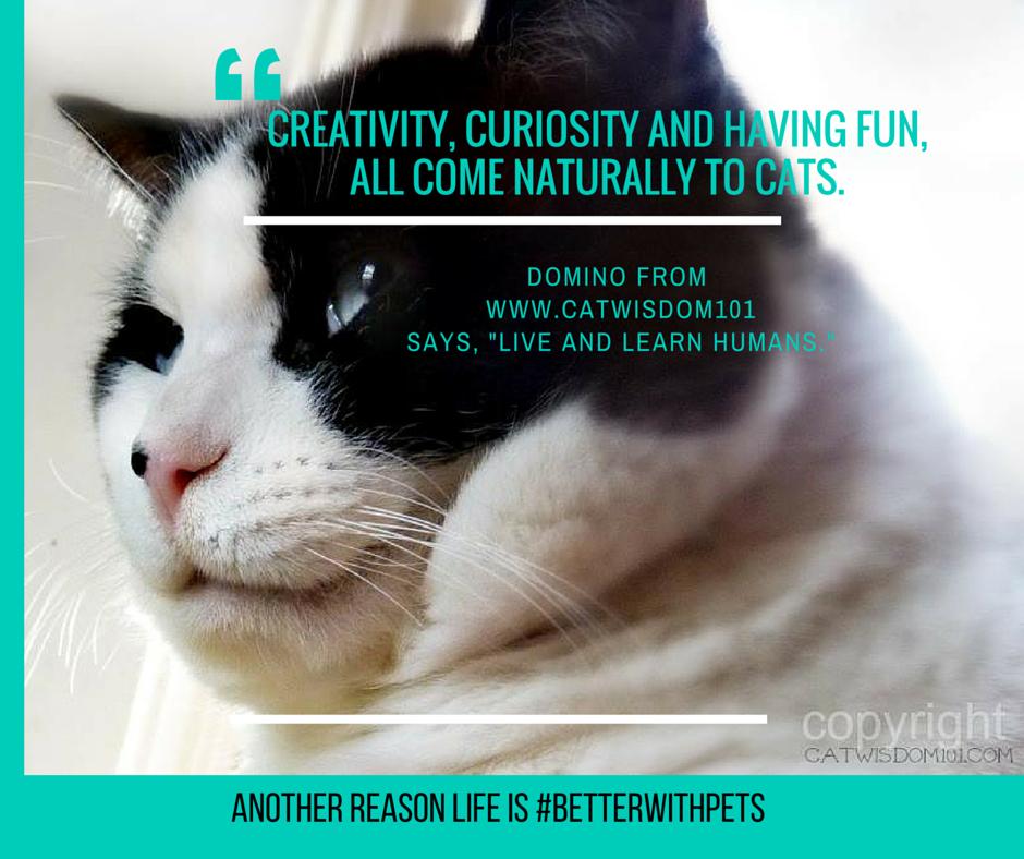 cat_quote_creativity