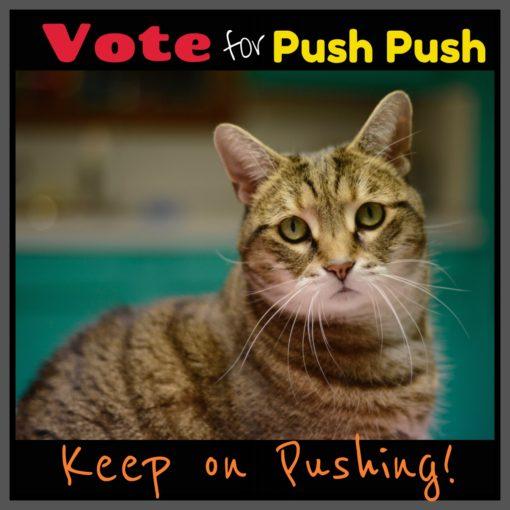 Push_Push_cat_contest