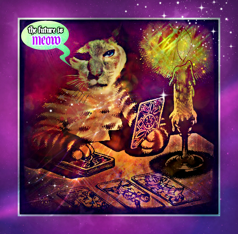 merlin_cat_tarot_pushPush