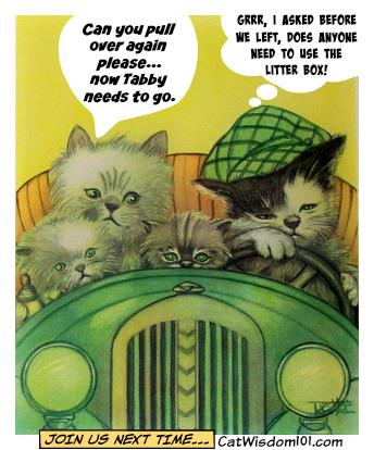 funny_vintage_cat_Caption_contest