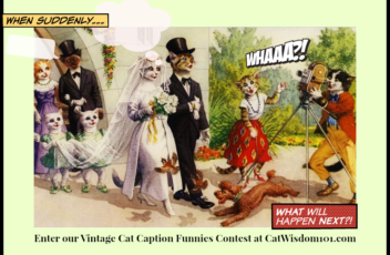 Cat_wedding_caption_contest