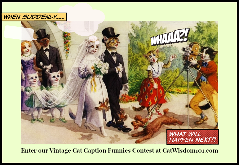 Cat Caption Funnies Contest: Here Comes The Bride From 1902