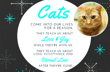 Cats_love_loss_quote