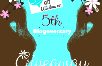 5th_blogoversary_cat_wisdom101