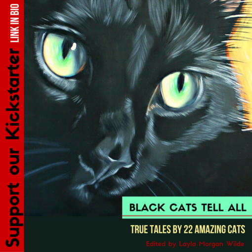 Support our Kickstarter_black_cats_tell_all