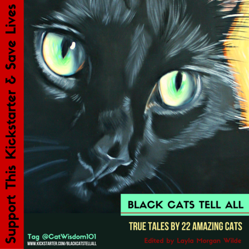 black_cats_tell_all