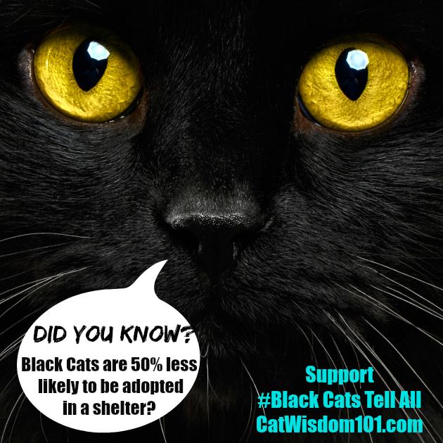 black_cat_adoption