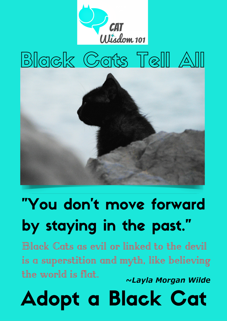 black cats quote