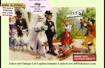 Cats_wedding_caption_contest