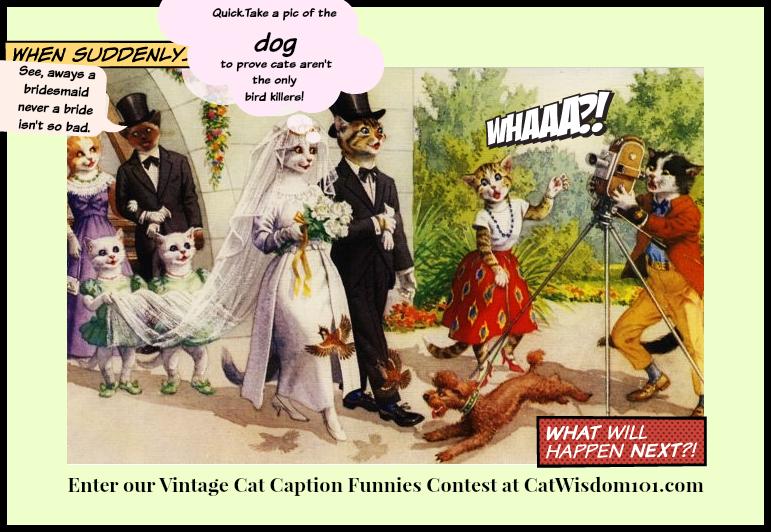 cat_caption_contest