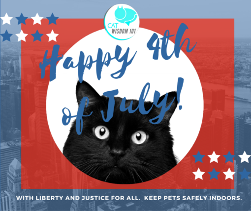 4th of July black cat