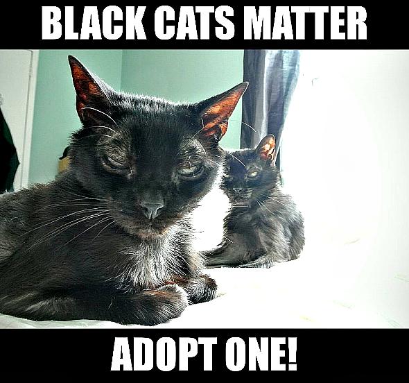 black kitten lady love