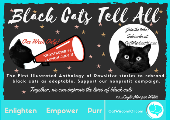 calling_all_black_cats