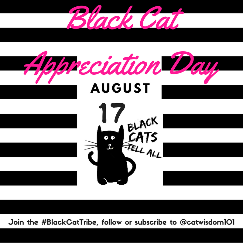 black cat appreciation day-