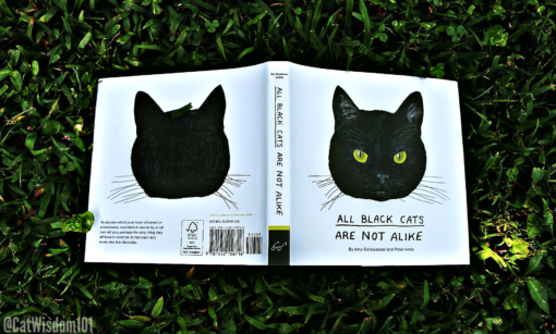 All_BlackCats_are_not_alike