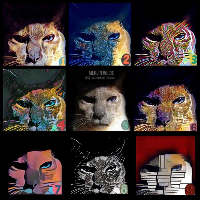 feline nine