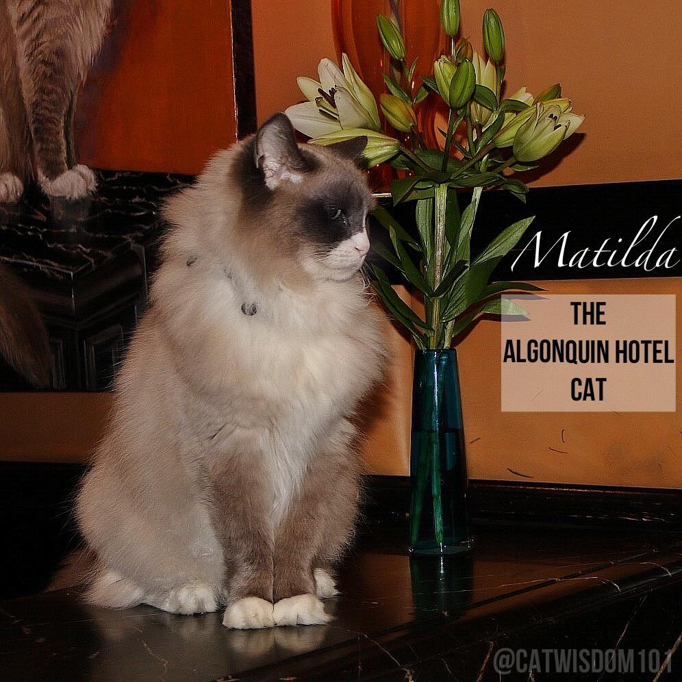 Matilda_ Algonquin_Hotel_cat