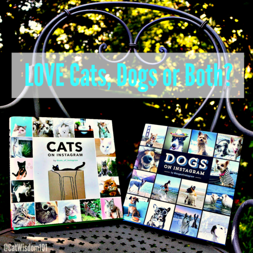 Instagram_cats_dogs_book