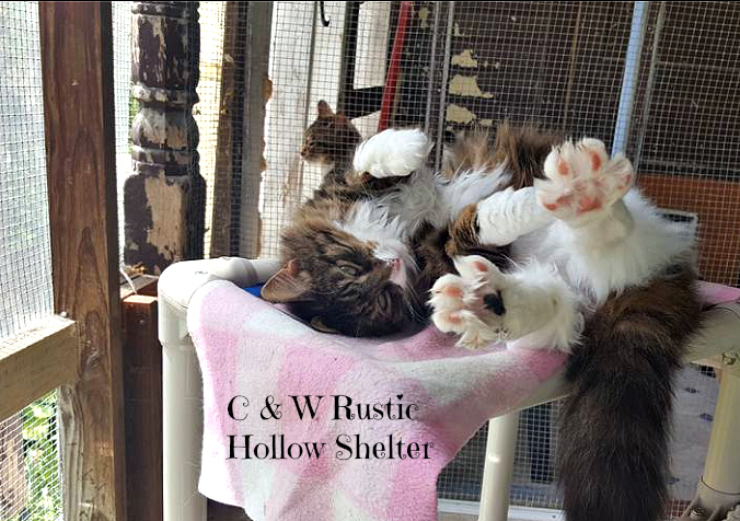 c & w Rustic Hollow_shelter