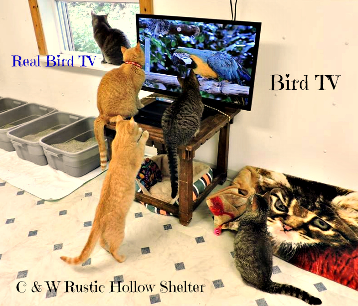 bird Tv _cat shelter