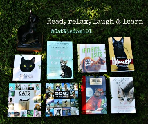 cat_book_favorites