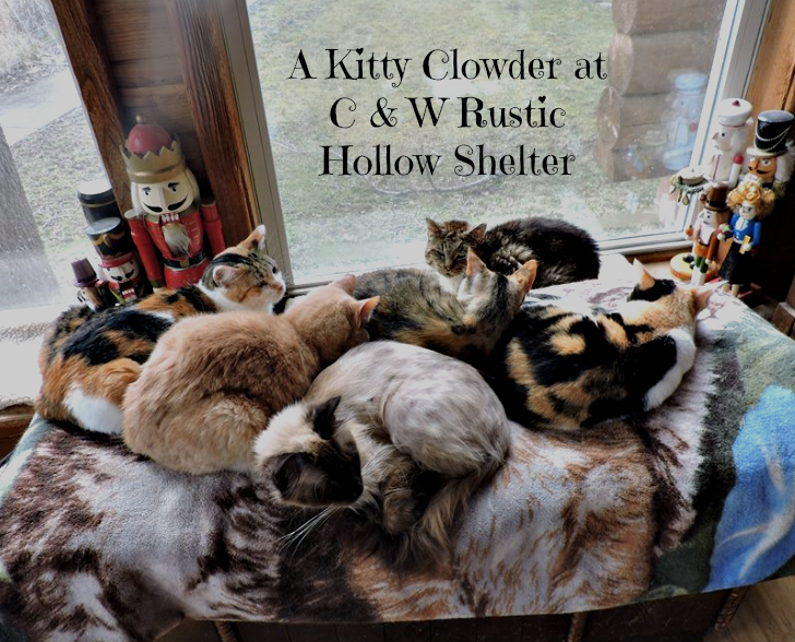 kitty_clowder