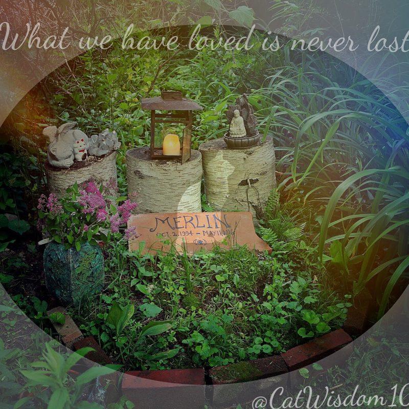 meowmorial_garden