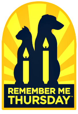 Love Cats? Light a Candle #RemembertheRescue