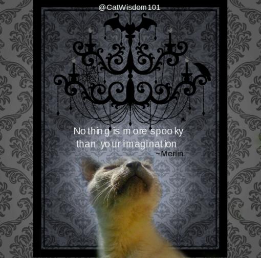 Siamese Halloween Cat