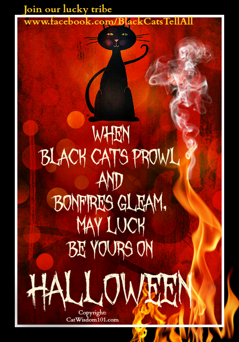 blackcat_bonfire_halloween