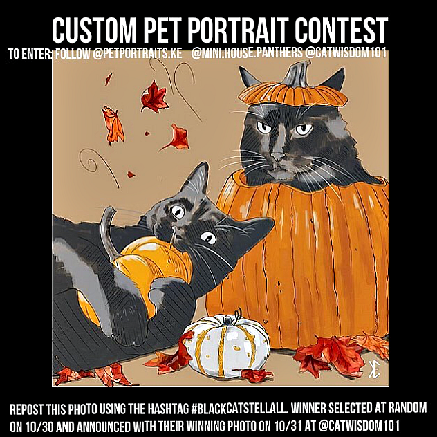 Black Cat Halloween Luck Contest Vintage Cards