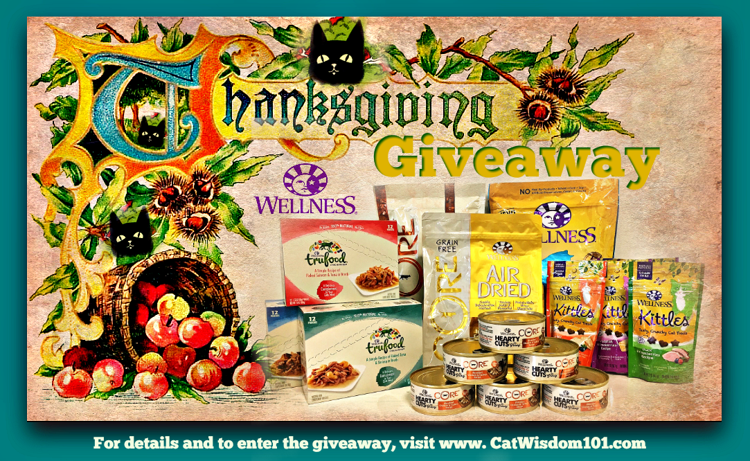 thanksgiving_giveaway_catwisdom101_wellness